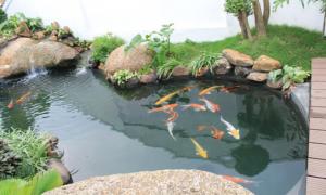 Hồ cá koi vườn nhà đẹp