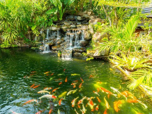 Thiết kế tiểu cảnh đơn giản với cây xanh và hồ nước của Nhật