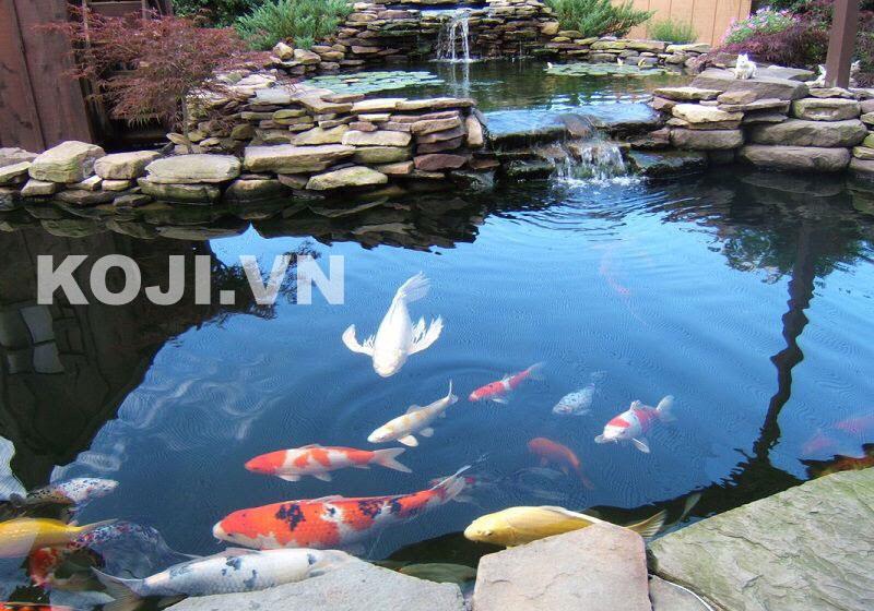 Hồ cá koi sân vườn kết hợp thác nước