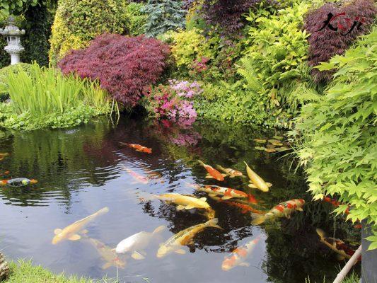 Các loại hoa điểm thêm sắc màu cho hồ cá sinh động hơn