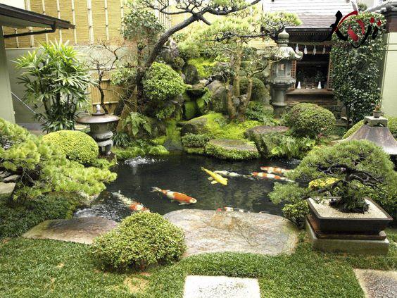Các loại cây cảnh tạo bóng mát và làm dịu không khí