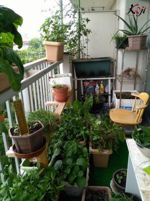 Tự làm sân vườn nhỏ đẹp ngay ngoài ban công