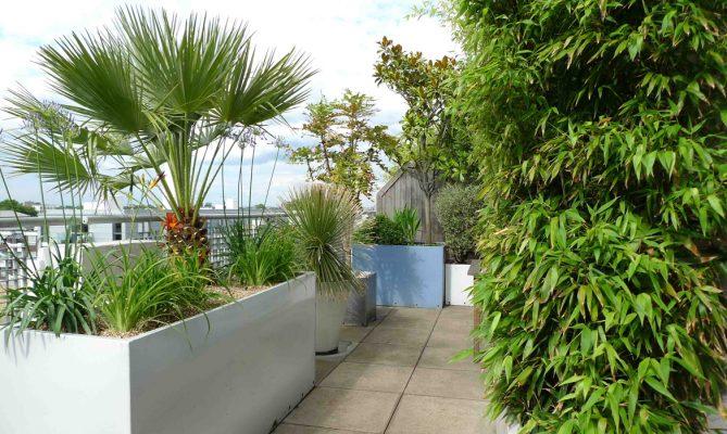 cây trồng to trên sân thượng