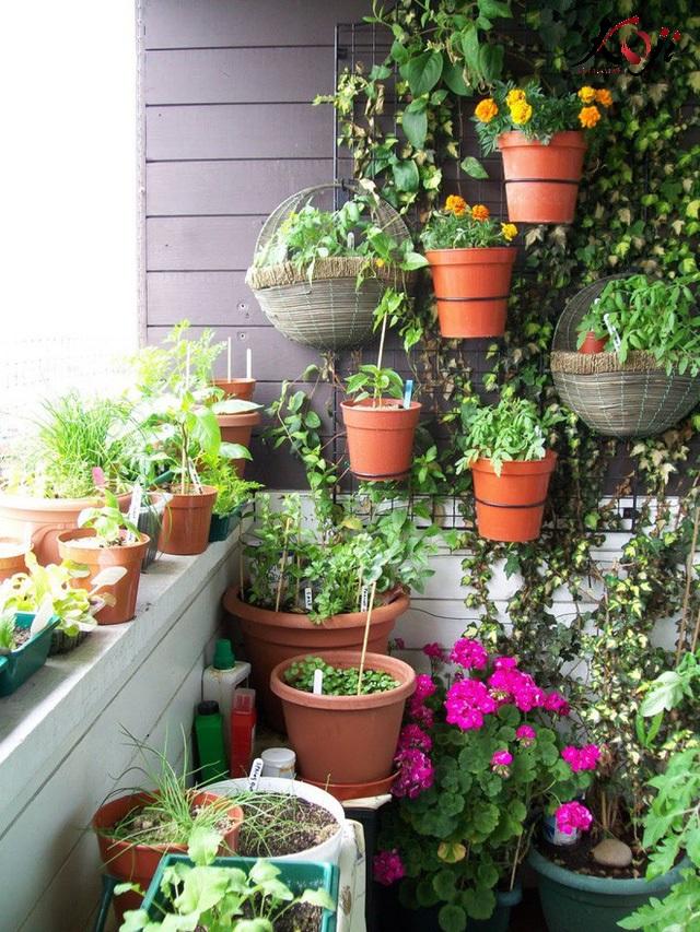 Tường trở thành chỗ treo các chậu hoa nhỏ xinh