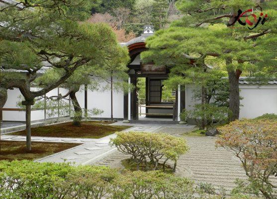 Cảnh quan sân vườn sử dựng cây là chủ yếu