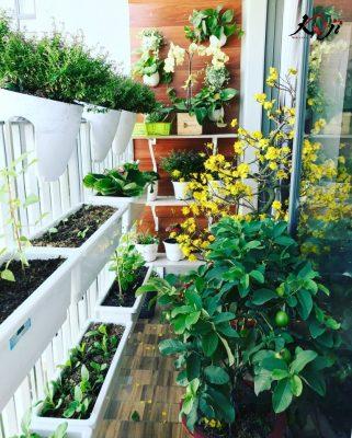 Cây các loại cây và hoa đơn giản tại nhà