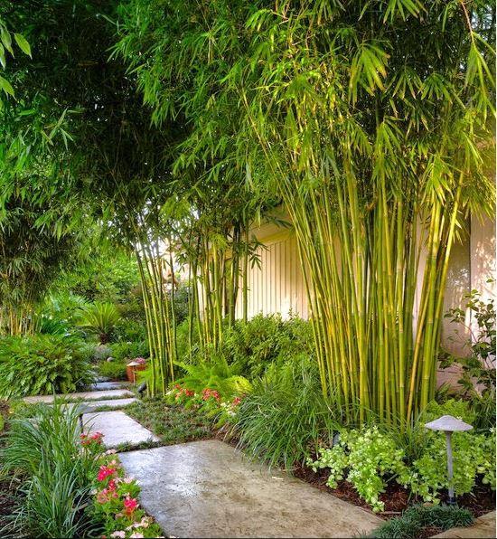 Sân vườn biệt thự trồng hàng tre xanh