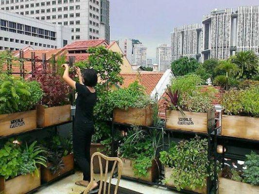 Bạn có thể trồng các loại rau mà gia đình yêu thích