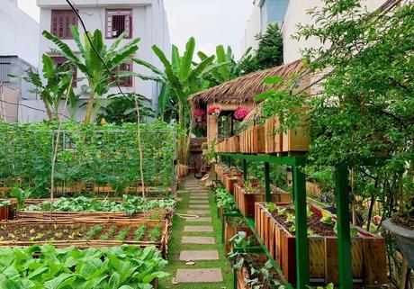Vườn sau tươi xanh trong sân vườn nhà đã có thể thu hoạch