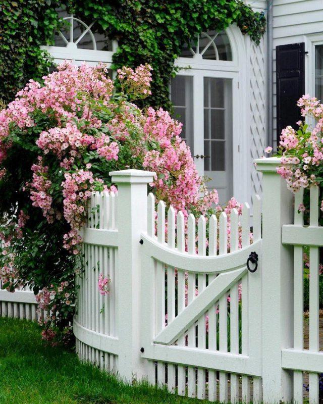 Điểm nhấn thêm hàng rào hoa hồng cho khu vườn thêm bừng sáng