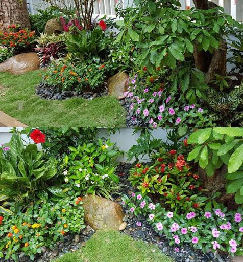 Những loài cây cảnh có thể trang tri sân vườn nhà