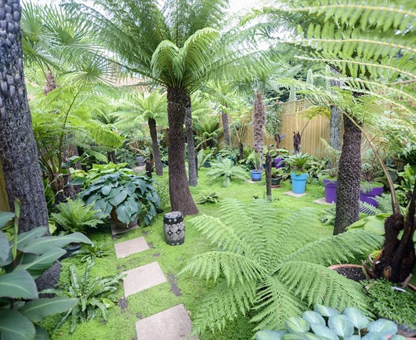 Cây dương sỉ trang trí cung cây dừa
