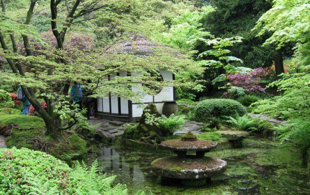 Hồ nước trong xanh cừng những cây cổ thụ quanh vườn