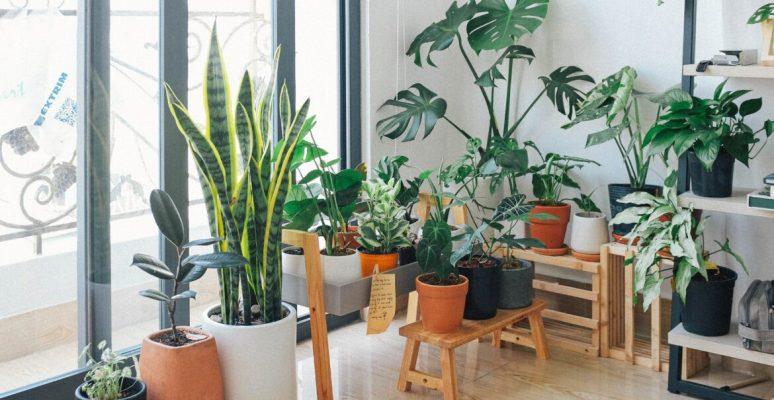 Một góc nhỏ trong phòng cũng sẽ là vị trí đẹp để bạn trang trí sân vườn