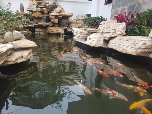 Công trình hồ cá koi hòn non bộ sau khi thi công