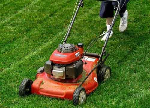Cắt tỉa cho cỏ sân vườn