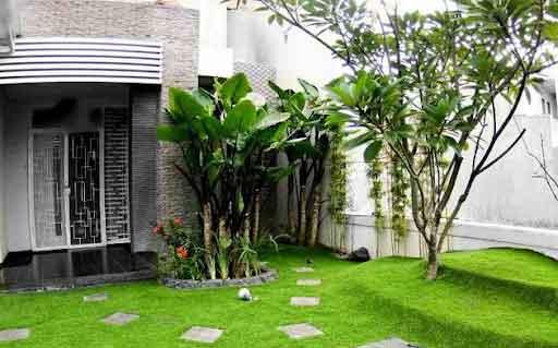 Thảm cỏ được trồng trong khoảng sân trước nhà