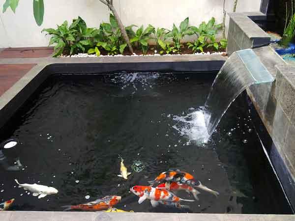 Thiết kế hồ cá thác nước hết sức thẩm mỹ, tạo điểm nhấn đặc biệt cho cả một không gian nhà vườn
