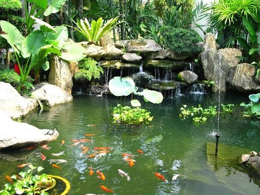 Oxy đóng vai trò quan trọng trong hồ cá koi
