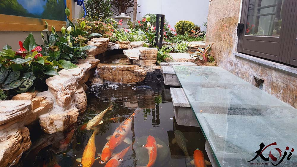 Hồ cá nên đặt ở nơi có không gian thoáng đãng, rộng rãi