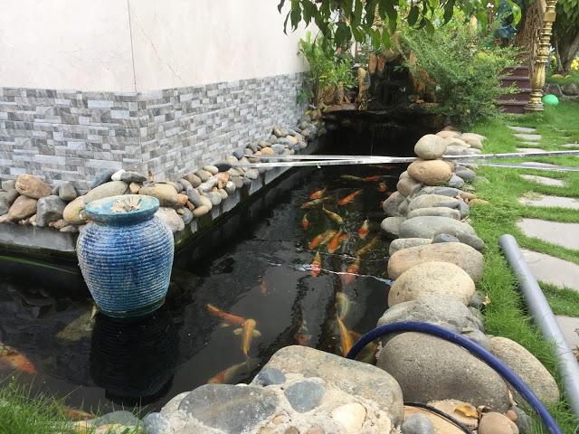 Hồ cá nhỏ trong 1 góc của vườn nhà cũng đủ làm tổng thể căn nhà thêm phần thu hút và ấn tượng
