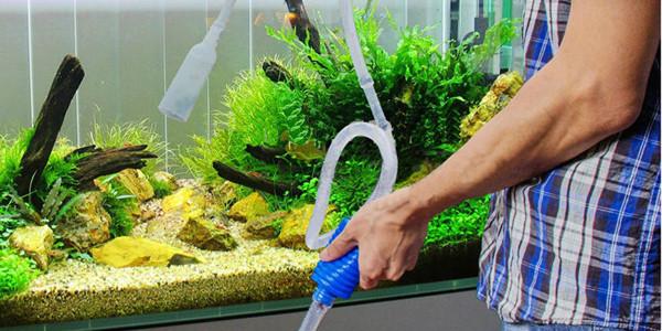 Vệ sinh thay nước cho bể cá