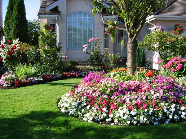 Một vườn hoa ấn tượng nhiều màu sắc, bố cục rõ ràng