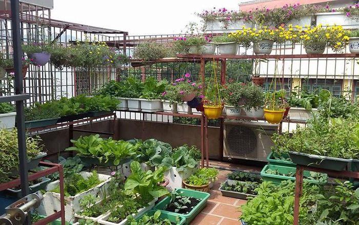 Vườn rau phía sau nhà là nguồn cung cấp thực phẩm sạch cho cả gia đình