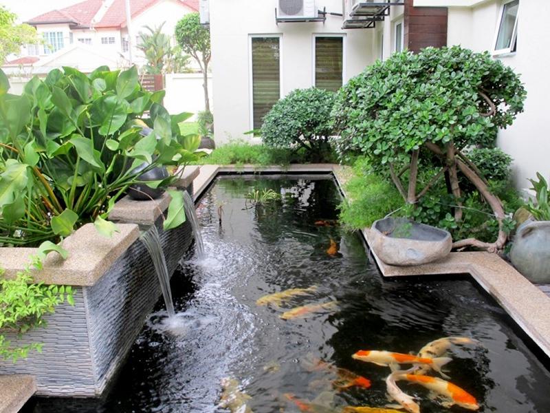 Thác nước, hồ cá koi phía sau nhà mang đến phong thủy tốt