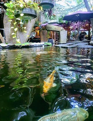 Hồ cá koi tại quán cafe