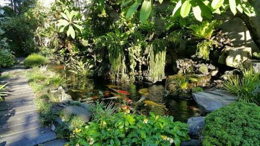 Trồng cây che mát hồ cá